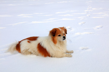 pet dog is in the snow