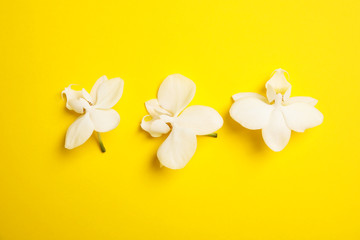 Beautiful tropical orchid flowers on color background, top view