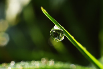 water droplet on blade of grass macro