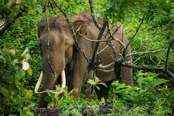 Assam culture and wildlife