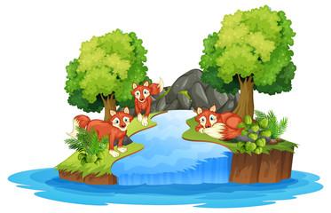 Isolated fox in island