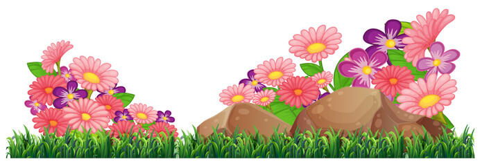 Isolated beautiful flower template