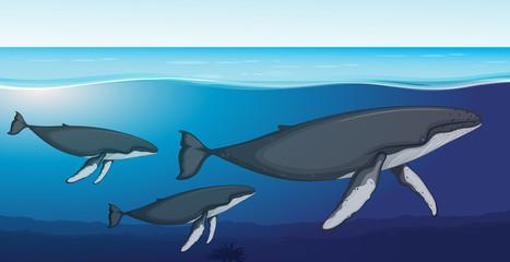 Fin whale deep underwater