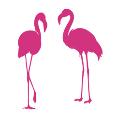 Flamingo. Exotic bird. Two pink flamingo, decorative flat design element