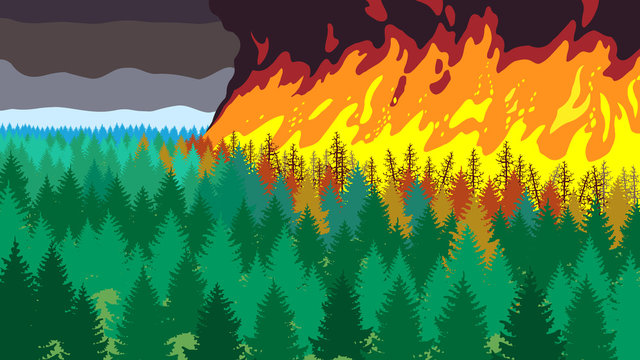 Terrible forest fire, landscape wich wildfire, ecological catastrophe, sky in smoke