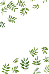 Wall Mural - Border frame with of green leaves isolated on white background. apartment layout, top view