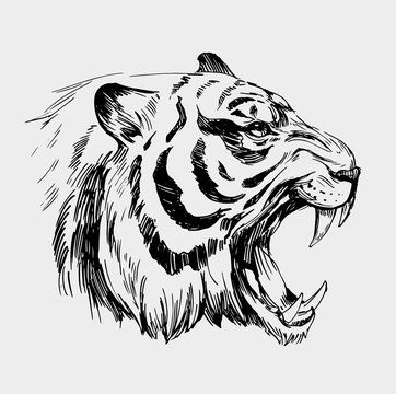 Head of angry tiger. Hand drawn illustration converted to vector