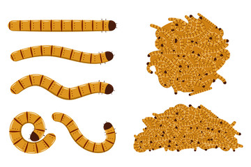 Flour worms vector cartoon set isolated on white background.