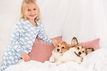 adorable child looking at camera and stroking pembroke welsh corgi dogs lying in bed