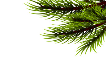 Realistic isolated fir banner background