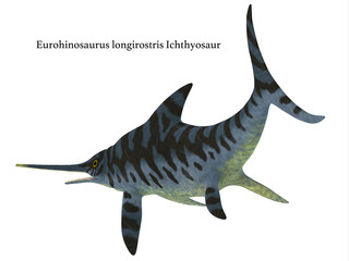 Eurhinosaurus Reptile Tail with Font - Eurhinosaurus was a carnivorous Ichthyosaur reptile that lived in Europe during the Jurassic Period.