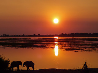 orange sunset at Chobe river in Botswana with silhouettes of two elephants