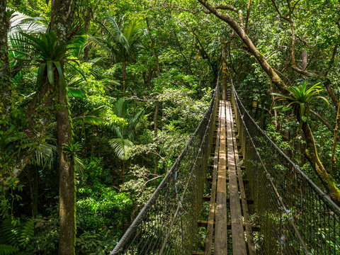 Suspended foot bridge in tropical rain forest, wood and steel cable