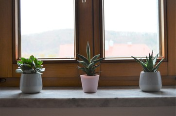 three green cactus plants on a windowsill in a row as decoration inspiring idea for the bedroom at home