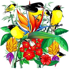 Poster de jardin Draw Birds Cute Exotic Bananaquit on Tropical Nature