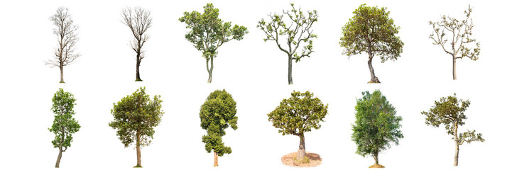 trees on white background , The collection of 12 trees. Wall mural