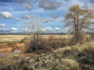 Rocky, winter, northern, california scenic of dry grasses, trees and blue, cloudy sky