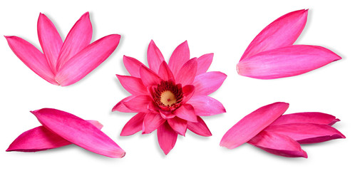 Colection Lotus flower isolated on white background