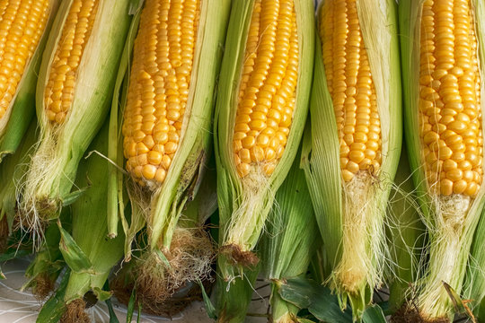 raw fresh corn for boiling at market stall