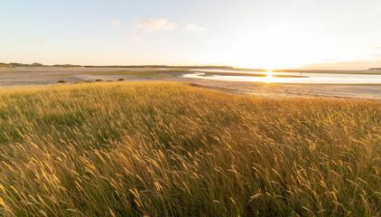 Golden hour at De Slufter, a nature reserve on Texel.