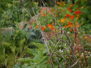 permaculture garden with beans and flowers