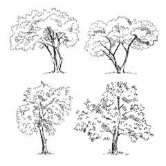 Hand drawn tree sketches set. Vector illustration.