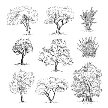 Hand drawn tree sketches set. Vector illustration.