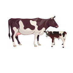 Cow mother with baby calf