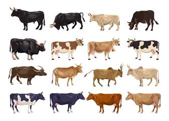 Cattle breeding set Wall mural
