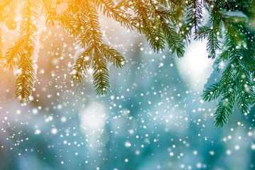 Pine tree branches with green needles covered with deep fresh clean snow on blurred blue outdoors copy space background. Merry Christmas and Happy New Year greeting postcard. Soft light effect.