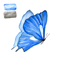 Blue butterfly in watercolor on a white background.