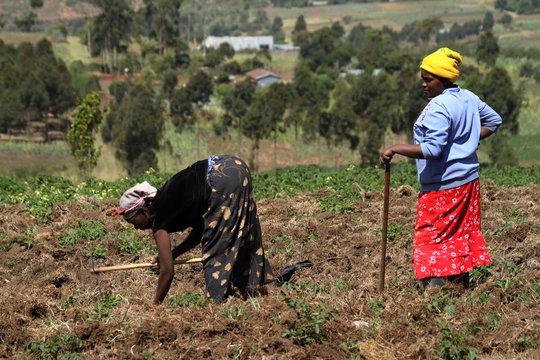 Ackerbau und Landwirtschaft in Kenia