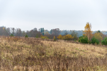 empty countryside landscape in autumn with fields and meadows and rare trees in background