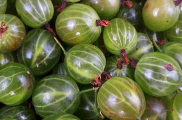 many green gooseberry fruit