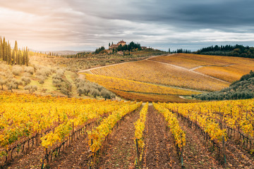 Chianti Region, Tuscany. Vineyards in autumn. Italy