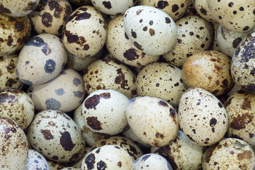 background from a lot of quail eggs texture of eggs closeup