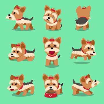 Vector cartoon character yorkshire terrier dog poses set for design.