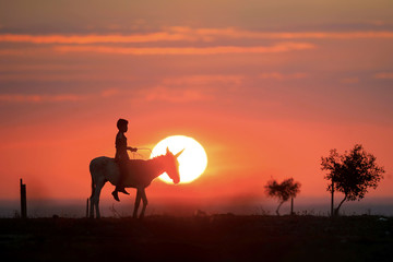 A Bedouin boy rides a donkey on a sunset, in a field near the southern city of Ofakim, Israel