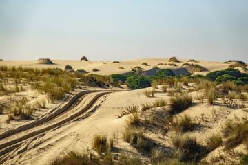 Wheel marks in the sand of the desert