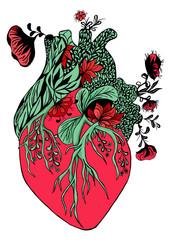 Blooming anatomical human heart.