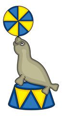 Cute seal in circus
