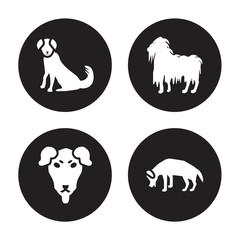 4 vector icon set : Berger Picard dog, Beauceron Bergamasco Beagle dog isolated on black background