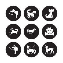 9 vector icon set : Pitbull dog, Pekingese Newfoundland Norfolk Terrier Nova Scotia Duck Tolling Retriever Papillon Otterhound Mudi dog isolated on black background