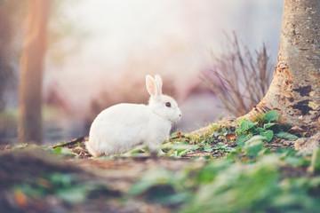 rabbit on nature cute little white rabbit on autumn garden nature background Wall mural