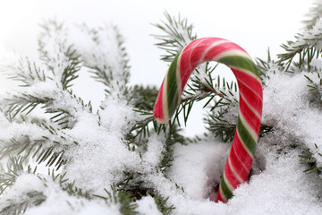 striped candy staff in a snowdrift next to the snow-covered branches of a Christmas tree / winter holidays