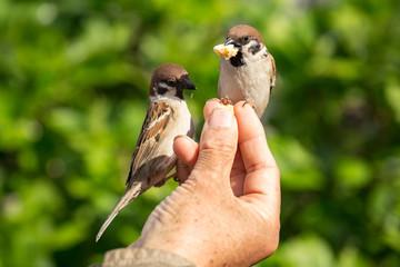 Vögel füttern mit der Hand