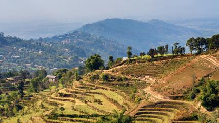 Terrace gardens near Kathmandu in Nepal