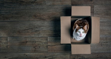 Cute tabby cat in a cardboard box looking up to the camera.  Panoramic picture with copy space.