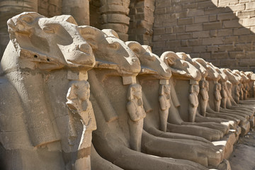 Row of ancient egyptian ram statues in Karnak Temple