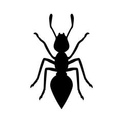 Black ant on white background for design